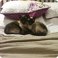 Adopt A Pet :: Schlomo - Greeley, CO