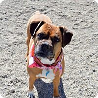 Adopt A Pet :: Ellie - Buena Vista, CO