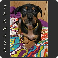 Adopt A Pet :: Thomsyn - New Milford, CT