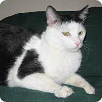 Adopt A Pet :: Ellen - Phoenix, AZ