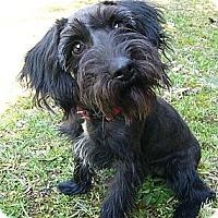 Adopt A Pet :: Lilly - Mocksville, NC