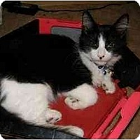 Adopt A Pet :: Edward - Catasauqua, PA