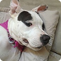 Adopt A Pet :: Ella - Dana Point, CA