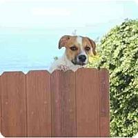 Adopt A Pet :: Bruce - Chula Vista, CA