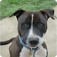Adopt A Pet :: SCOOPY DOO - Family Guy! - Sacramento, CA