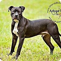 Adopt A Pet :: Taco - Orlando, FL