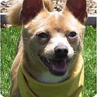 Adopt A Pet :: Henry - Encinitas, CA