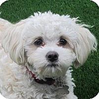 Adopt A Pet :: Finn - La Costa, CA