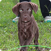 Adopt A Pet :: Rhett - Southington, CT