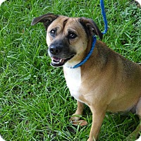 Adopt A Pet :: Star - Palmetto Bay, FL
