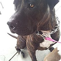 Adopt A Pet :: Kaia - Huntington Beach, CA