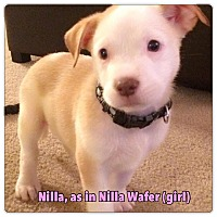 Adopt A Pet :: Nilla - North Olmsted, OH