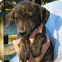 Adopt A Pet :: George - Stamford, CT