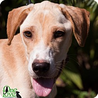 Adopt A Pet :: Kala - Savannah, GA