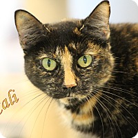 Adopt A Pet :: Cali - Winter Haven, FL