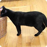 Adopt A Pet :: Pinky - Homewood, AL