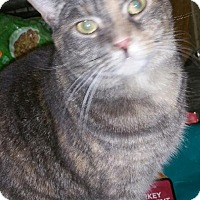 Adopt A Pet :: Ashlyn - Morganton, NC