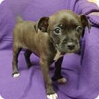 Adopt A Pet :: Patience - Joliet, IL