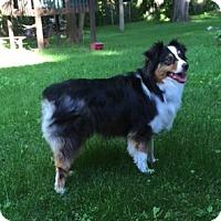 Adopt A Pet :: Boyd - Elk River, MN