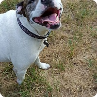 Adopt A Pet :: Gracie - Eastpointe, MI