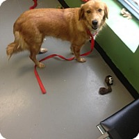 Adopt A Pet :: Miss Molly - Adoption Pending - Rockville, MD