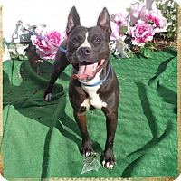 Adopt A Pet :: WAYLON-see video - Marietta, GA