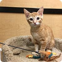 Adopt A Pet :: Madison - Riverside, CA