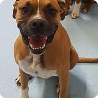 Adopt A Pet :: Rico - Aurora, IL