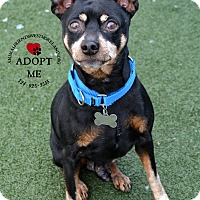 Adopt A Pet :: Coco - Youngwood, PA