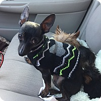 Adopt A Pet :: Chi Chi - Blanchard, OK