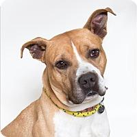 Adopt A Pet :: Slade - San Luis Obispo, CA