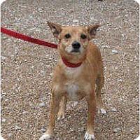 Adopt A Pet :: Blazer - Godfrey, IL