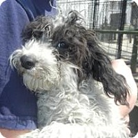 Adopt A Pet :: Cadbury - Antioch, IL