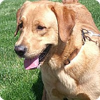 Adopt A Pet :: Fiddler - Lewisville, IN