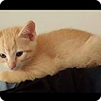 Adopt A Pet :: Ollie - St. Louis, MO