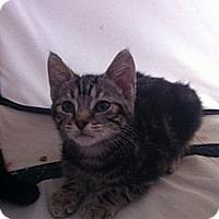Adopt A Pet :: Rascal - Long Beach, NY