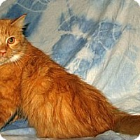 Adopt A Pet :: Sylvia - Norwich, NY