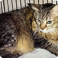 Adopt A Pet :: Tiigera - Escondido, CA