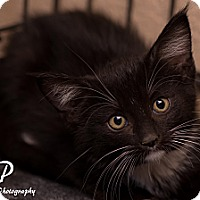 Adopt A Pet :: Andrew - Fountain Hills, AZ