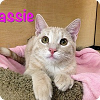 Adopt A Pet :: Cassie - Foothill Ranch, CA