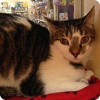 Adopt A Pet :: Klempner - McHenry, IL