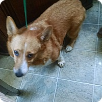 Adopt A Pet :: Lady Charlotte - Simi Valley, CA