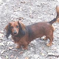 Adopt A Pet :: Baby - Westport, CT