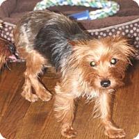 Adopt A Pet :: Gidget - Atlanta, GA