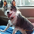 Adopt A Pet :: Precious #2(6 lb) Sweetheart!