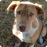 Adopt A Pet :: Charlotte - Huntsville, AL