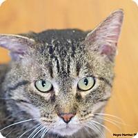 Adopt A Pet :: Neville - Homewood, AL