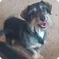 Adopt A Pet :: Daisy - Los Angeles, CA