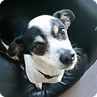 Adopt A Pet :: Hercules - Lakeland, FL