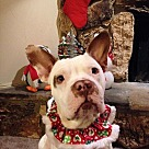 Adopt A Pet :: Finnigan - Courtesy Post